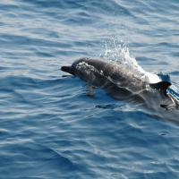 Dolphin Watching Sri Lanka