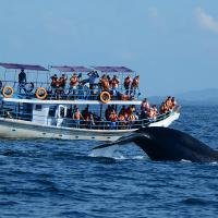Whale Watching Sri Lanka 5