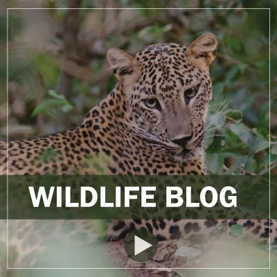 wildlife blog